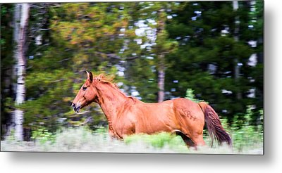 On The Move Metal Print by John McArthur