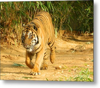 Metal Print featuring the photograph On The Prowl by Emmy Marie Vickers