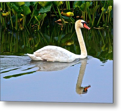On The Swanny River Metal Print by Frozen in Time Fine Art Photography