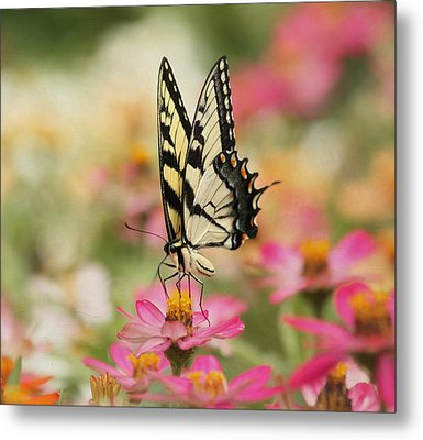 On The Top - Swallowtail Butterfly Metal Print by Kim Hojnacki