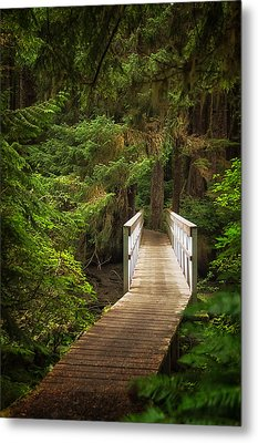 On The Trail Metal Print by Carrie Cole
