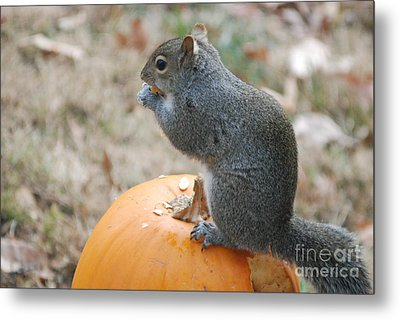Metal Print featuring the photograph On Top Of The Pumpkin by Mark McReynolds
