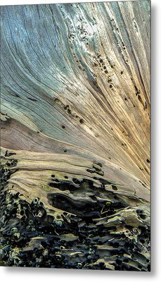 Once A Tree Metal Print by Christy Usilton