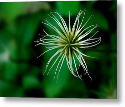 Once In Bloom Metal Print by Mary Beth Landis