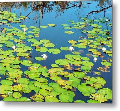 Once Upon A Lily Pad Metal Print by Eloise Schneider