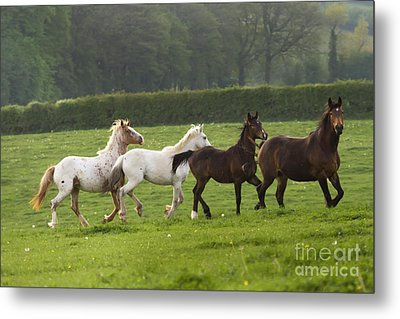 One After One Metal Print by Angel  Tarantella