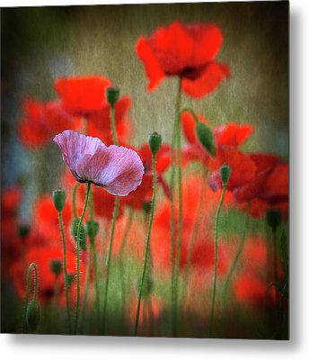 One Metal Print by Anne Worner