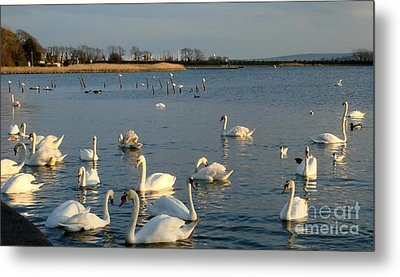 Metal Print featuring the photograph One Big Family... by Katy Mei