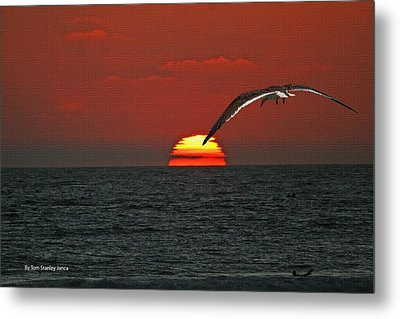 Metal Print featuring the photograph One Black Skimmers At Sunset by Tom Janca