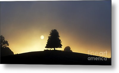 One Foggy Morning Metal Print by Tim Gainey