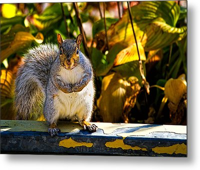 One Gray Squirrel Metal Print by Bob Orsillo