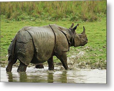 One-horned Rhinoceros, Coming Metal Print by Jagdeep Rajput