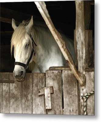 Metal Print featuring the photograph One Horse  by Raymond Earley