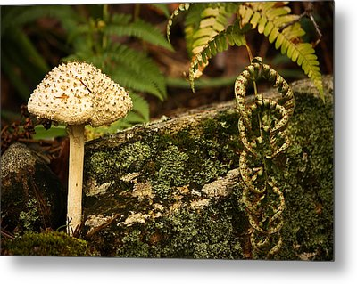 Metal Print featuring the photograph One Is A Lonely Number by Tammy Schneider
