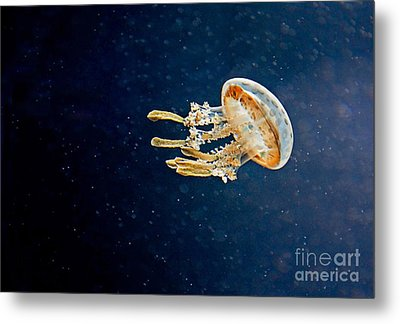 One Jelly Fish Art Prints Metal Print by Valerie Garner