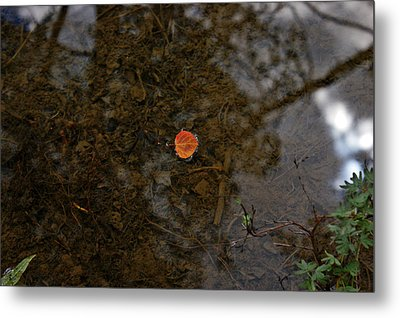 Metal Print featuring the photograph One Leaf by Jeremy Rhoades