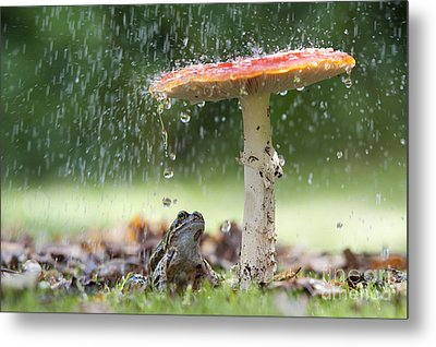 One Rainy Day Metal Print
