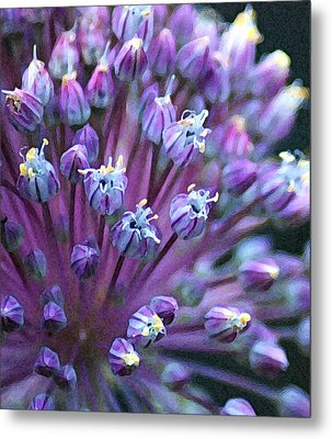 Metal Print featuring the photograph Onion Bloom by Kjirsten Collier