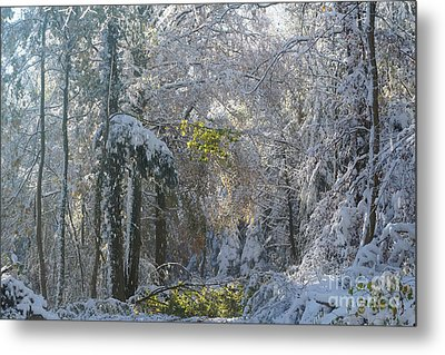 Metal Print featuring the photograph Onset Of Winter 1 by Rudi Prott