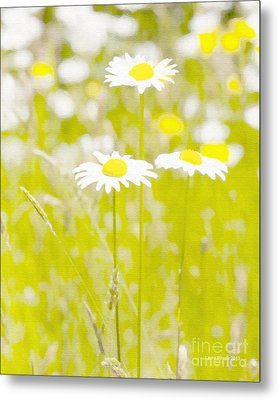 Oopsy Daisy Metal Print by Artist and Photographer Laura Wrede