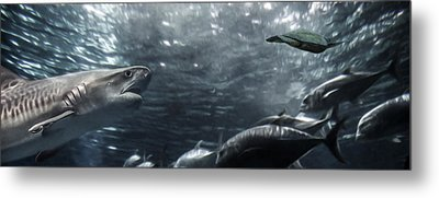 Open Water Metal Print by Brad Scott