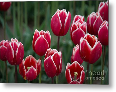 Opening  Metal Print by Patricia Babbitt