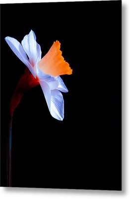 Opening To The Light Metal Print by Julia Wilcox