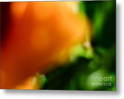 Orange And Green  Metal Print by Bobby Mandal
