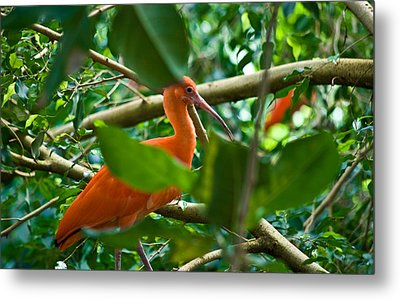 Orange And Green Wil 279 Metal Print