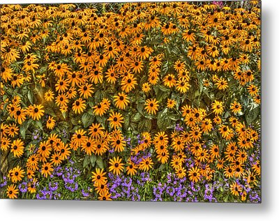 Metal Print featuring the photograph Orange And Purple Daises by Jim Lepard