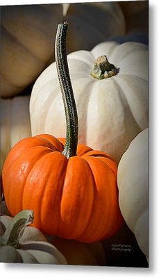 Orange And White Pumpkins Metal Print