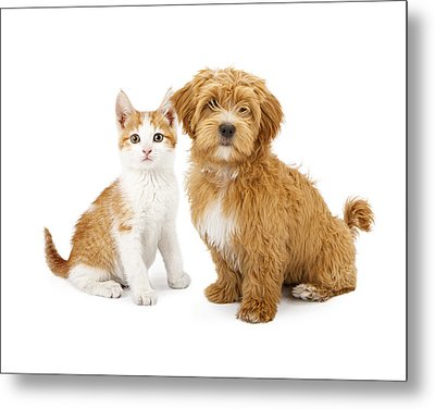 Orange And White Puppy And Kitten Metal Print