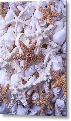 Orange And White Starfish Metal Print