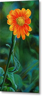 Orange Aster Metal Print by Cara Bevan