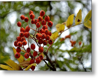 Metal Print featuring the photograph Orange Autumn Berries by Scott Lyons