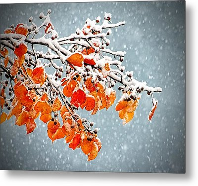 Metal Print featuring the photograph Orange Autumn Leaves In Snow by Tracie Kaska