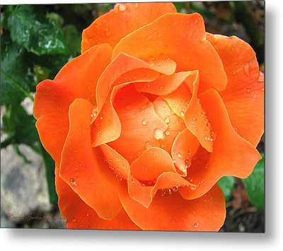 Metal Print featuring the photograph Orange Blossom Special by Brooks Garten Hauschild