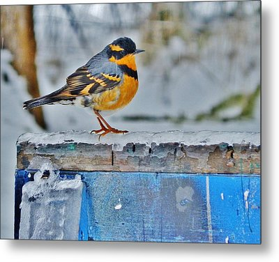 Orange Blue And Sleet Metal Print by VLee Watson