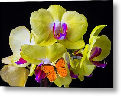 Orange Butterfly And Yellow Orchids Metal Print by Garry Gay