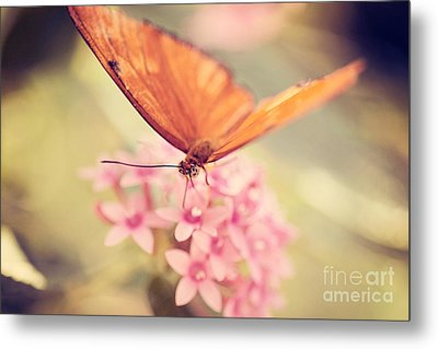 Orange Butterfly Metal Print by Erin Johnson