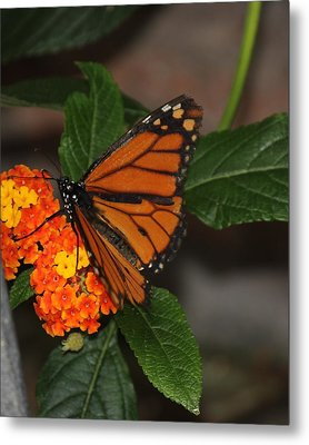 Metal Print featuring the photograph Orange Butterfly On Flowers by Bill Woodstock