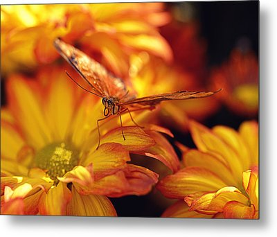 Orange Butterfly On Yellow Mums Metal Print by Maria Angelica Maira