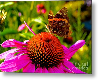 Orange Butterfly  Metal Print by Sarah Mullin