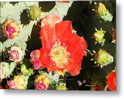 Metal Print featuring the photograph Orange Cactus Bloom by Dick Botkin