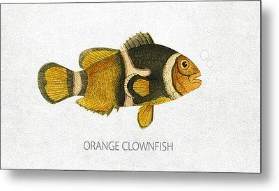 Orange Clownfish Metal Print by Aged Pixel