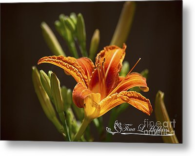 Metal Print featuring the photograph Orange Day Lily 20120615_21a by Tina Hopkins