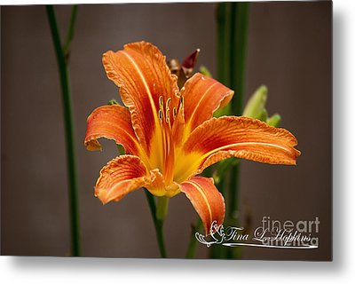 Metal Print featuring the photograph Orange Day Lily 20120620_27a by Tina Hopkins