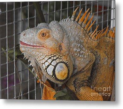 Orange Dragon  Metal Print by Erick Schmidt