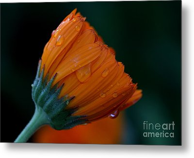 Orange Dream Metal Print by Ruth Jolly