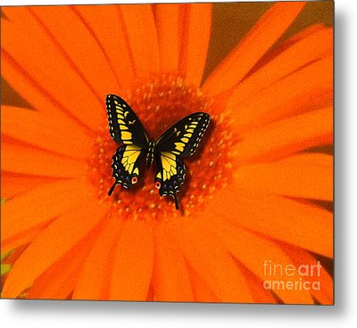 Metal Print featuring the photograph Orange Flower And A Butterfly By Saribelle Rodriguez by Saribelle Rodriguez
